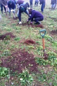Victoire Press Tree Planting 1